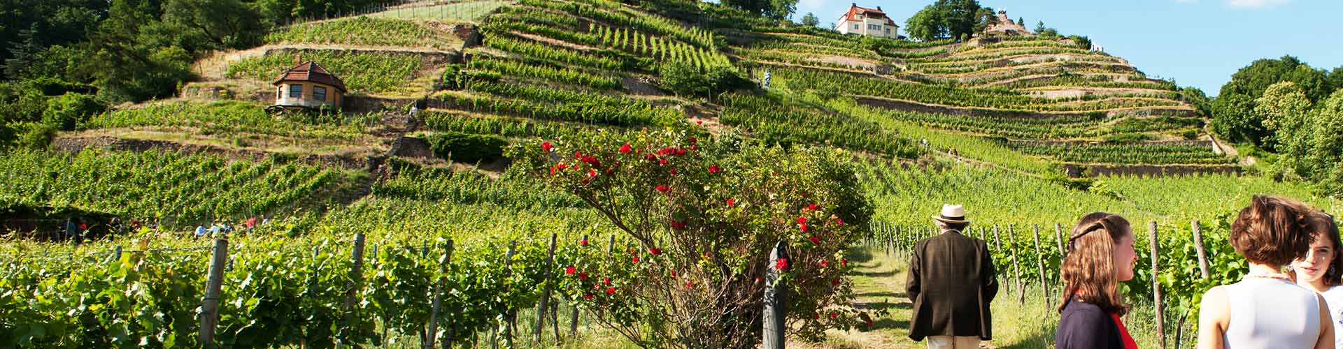 Spaziergänger auf dem Kunst- und Weinwanderweg
